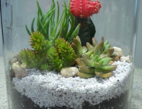 DIY – Make your own Terrarium